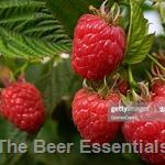 Honey Bulk - Raspberry 6 lbs.(out of stock)