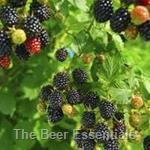 Honey Bulk - Blackberry 6 lbs.(out of stock)
