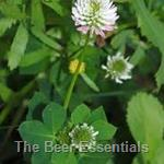 Honey Bulk - Clover 6 lbs.(out of stock)
